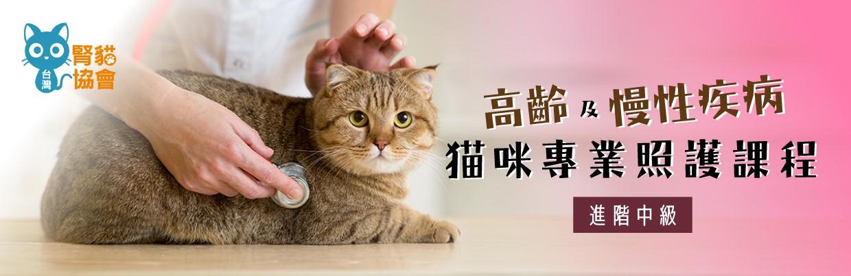 高齡及慢性疾病貓咪專業照護課程(進階中級)