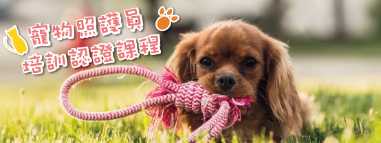 8WF7sample 寵物照護員職能培訓班 【基礎班】好評加開班!班班爆滿,請恕無法保留名額!
